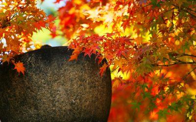 秋色を楽しみましょう